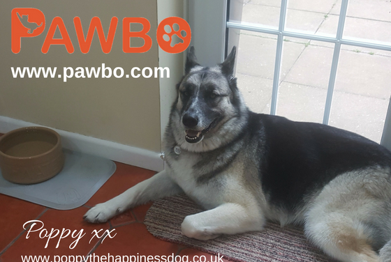 Review: Responsible Pet Ownership With Pawbo