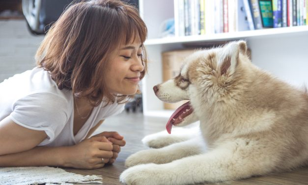 Guest Post: When Innocence Meets Curiosity – Introducing Your dog to Your Baby
