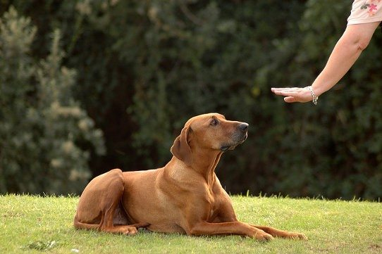 Guest Post: 4 Ways to Reward Your Dog without a Treat