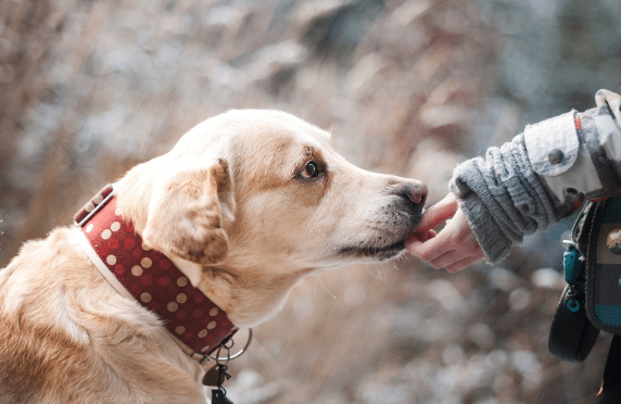 3 Reasons to Consider Getting a Dog