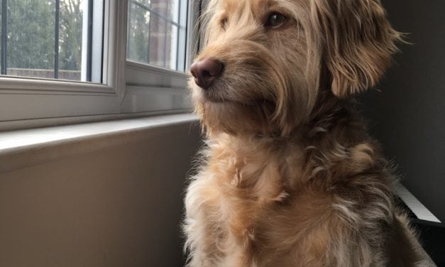 Guest Post: How My Productivity Increased When I got My Dog