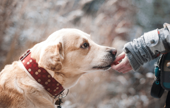 The Importance of Doggy Diets