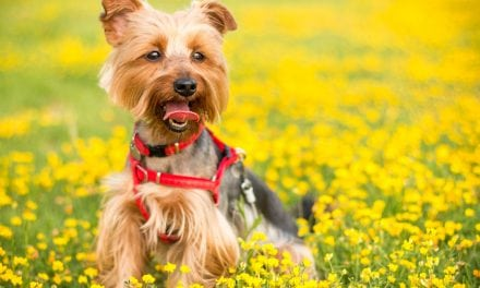 Guest Post: Dog Grooming Techniques