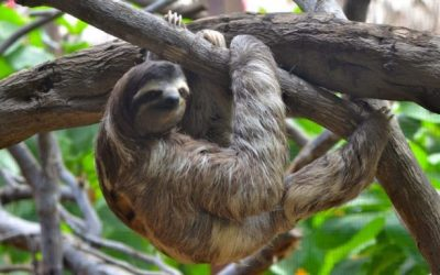 How To Shut Down Your Inner Sloth