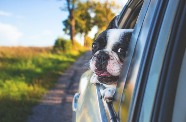 Surviving A Road Trip With Your Dog – Can It Be Done?