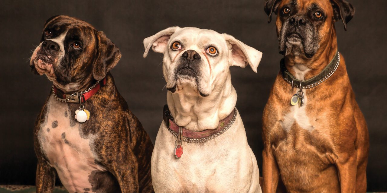 Common Health Problems In Dogs To Look Out For